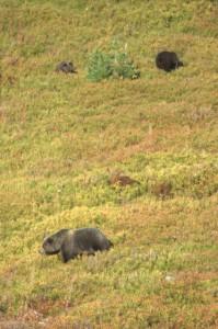 37 bears TZK