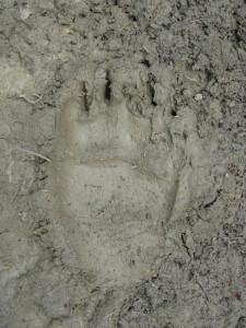 news13 Iwo foot
