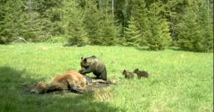 15 bears CBBP