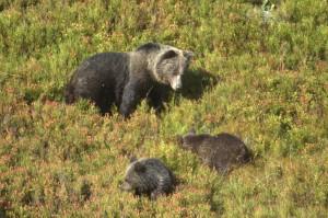 35 bears TZK