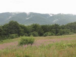 5 landscape NS